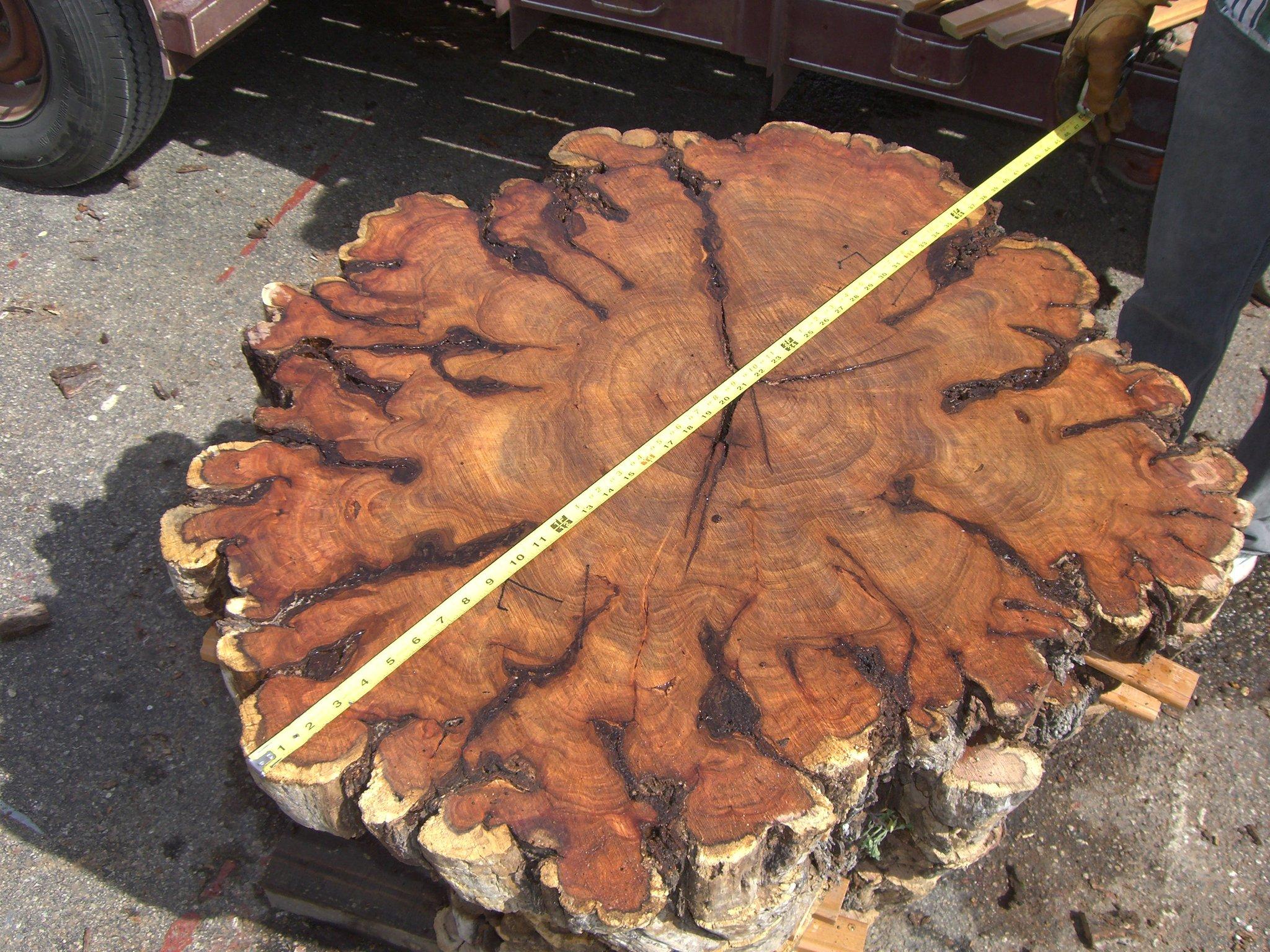 Milling Huge Mesquite Burls