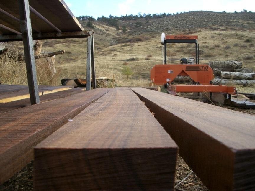 Walnut logs for sale