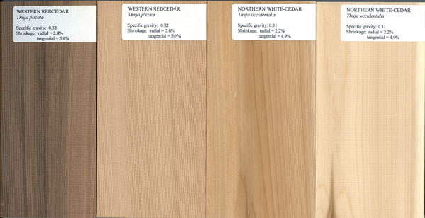 Northern white cedar lumber