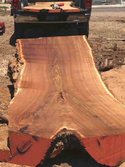 Y Crotch Lumber Examples